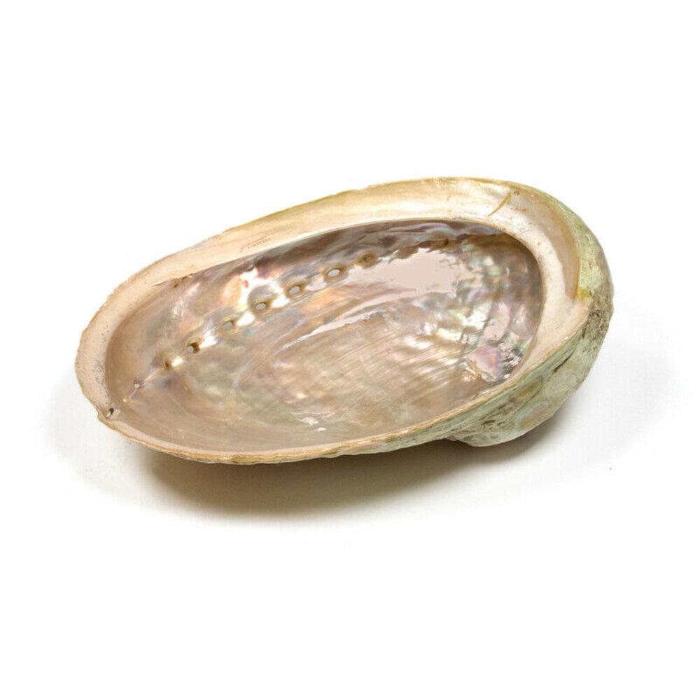 Abalone Muschel